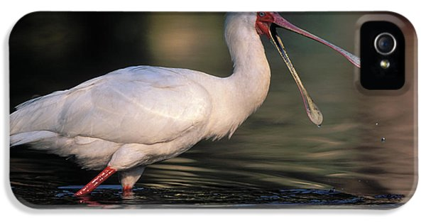 African Spoonbill IPhone 5 Case by Nigel Dennis