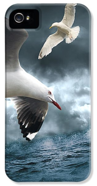 Albatross IPhone 5 Case