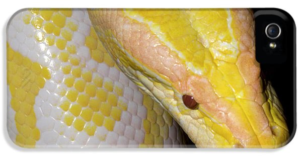 Albino Burmese Python IPhone 5 Case by Nigel Downer