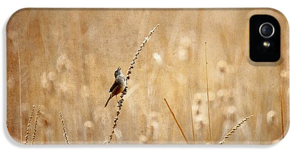 Wren iPhone 5 Case - All Rejoicing by Lois Bryan