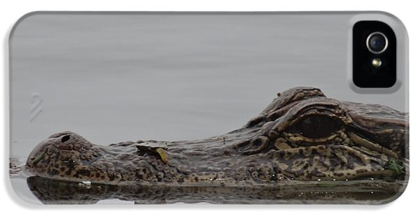 Breathe iPhone 5 Case - Alligator Eyes by Dan Sproul