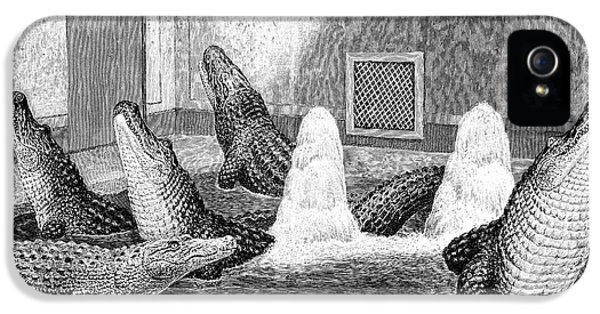 Alligators In Captivity IPhone 5 / 5s Case by Science Photo Library