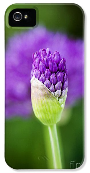 Allium Hollandicum Purple Sensation IPhone 5 Case by Tim Gainey