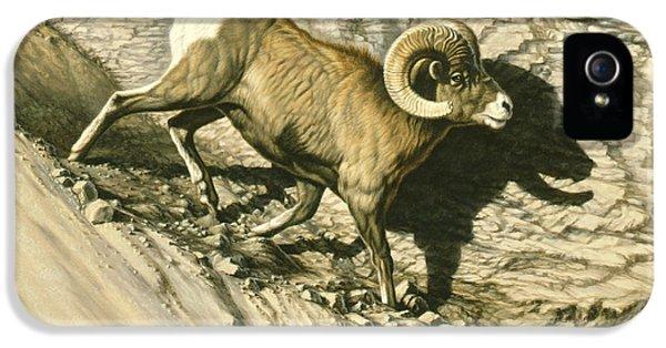 Along The Wall-bighorn Ram IPhone 5 Case by Paul Krapf