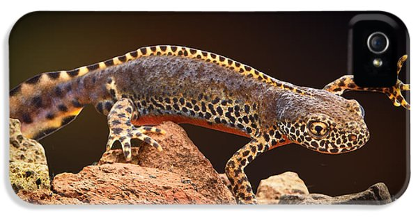 Alpine Newt IPhone 5 / 5s Case by Dirk Ercken