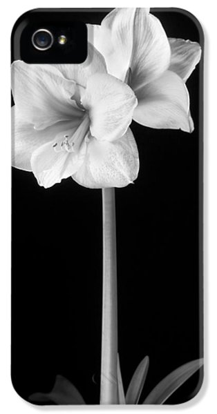 Amaryllis In Black And White IPhone 5 Case by Adam Romanowicz