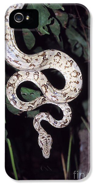 Amazon Tree Boa IPhone 5 / 5s Case by James Brunker