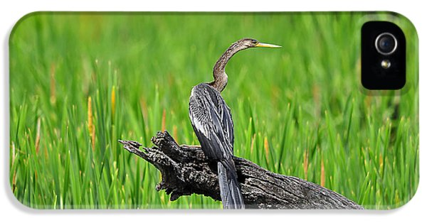 American Anhinga IPhone 5 Case by Al Powell Photography USA