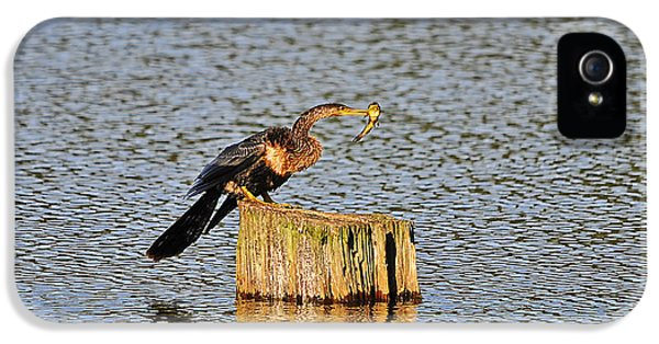 American Anhinga Angler IPhone 5 Case by Al Powell Photography USA