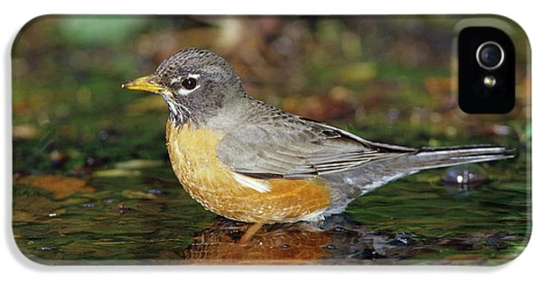 American Robin (turdis Migratorius IPhone 5 Case by Richard and Susan Day