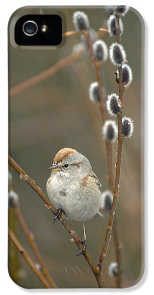 American Tree Sparrow In Pussy Willow IPhone 5 Case by Michael Quinton