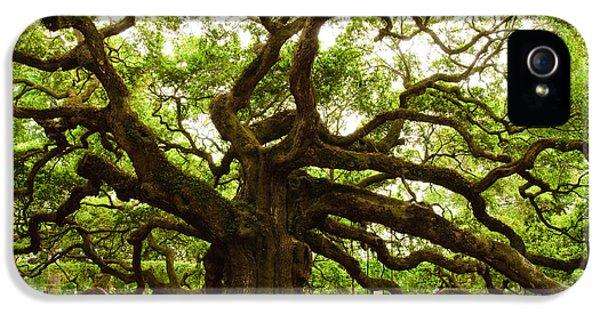 Angel Oak Tree 2009 IPhone 5 Case