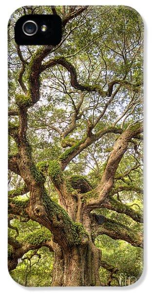 Angel Oak Tree Johns Island Sc IPhone 5 Case