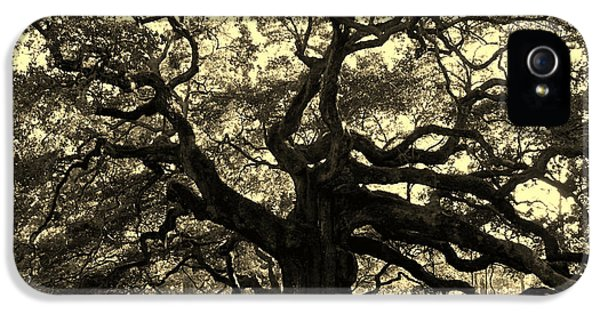 Angel Oak Tree Sepia IPhone 5 Case by Susanne Van Hulst