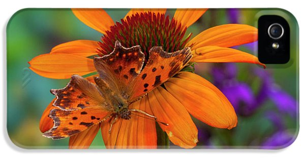 Angle Wing Butterfly On Cone Flower IPhone 5 Case