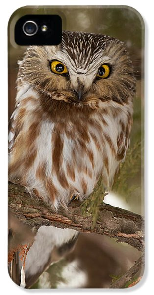 Angry Bird IPhone 5 / 5s Case by Mircea Costina Photography