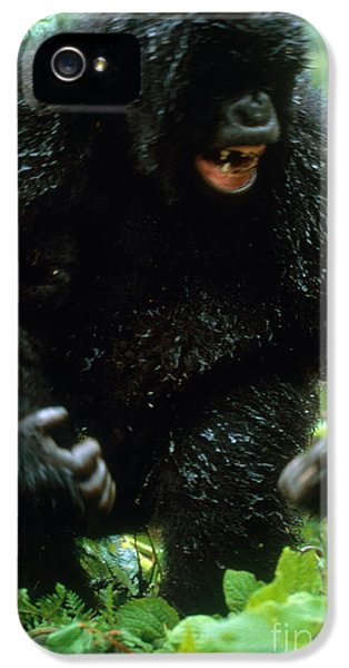 Angry Mountain Gorilla IPhone 5 Case by Art Wolfe