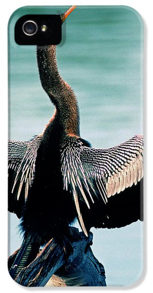 Anhinga Anhinga Anhinga Drying Feathers IPhone 5 Case