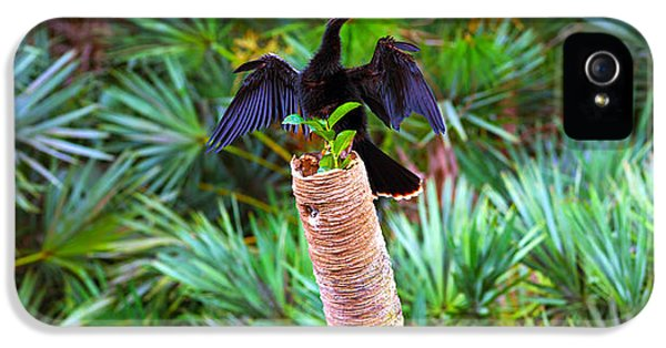 Anhinga Anhinga Anhinga On A Tree IPhone 5 Case by Panoramic Images