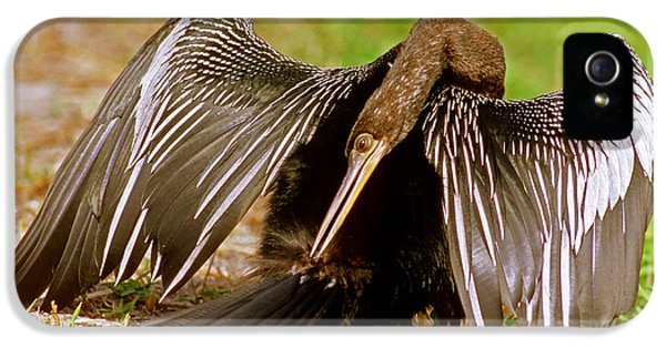 Anhinga Anhinga Anhinga Preening IPhone 5 Case by Millard H. Sharp