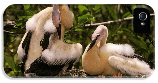 Anhinga Chicks IPhone 5 Case by Ron Sanford