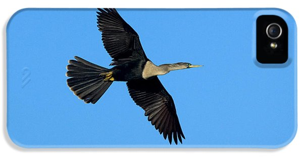 Anhinga Female Flying IPhone 5 Case by Anthony Mercieca