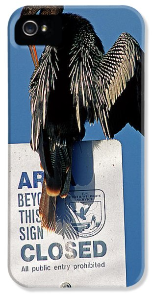 Anhinga Perched On A Signpost IPhone 5 Case