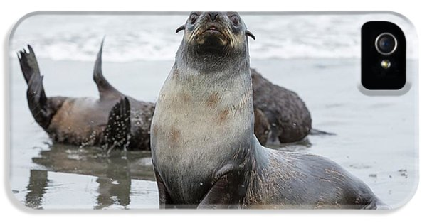 Antarctic Fur Seals IPhone 5 Case