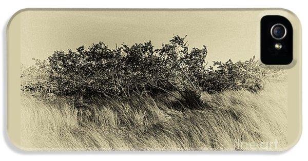 Apollo Beach Grass IPhone 5 Case