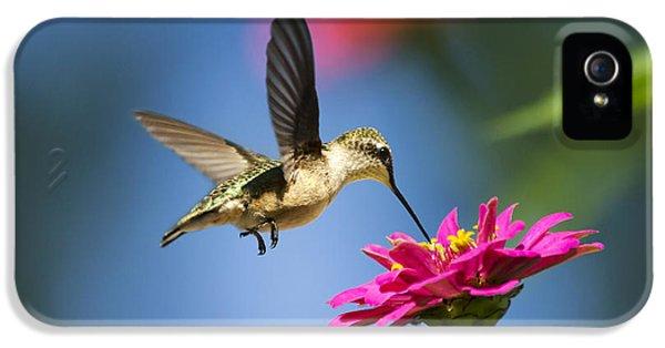 Art Of Hummingbird Flight IPhone 5 Case