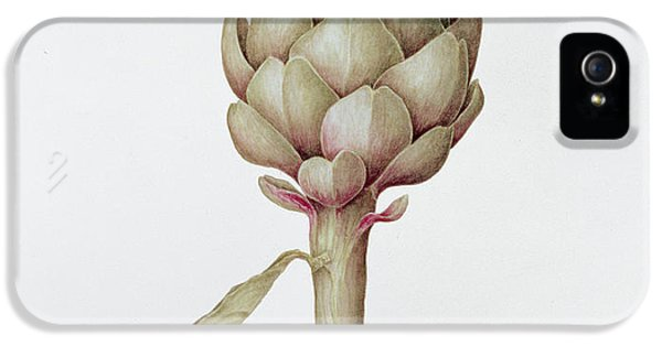 Artichoke IPhone 5 Case by Diana Everett