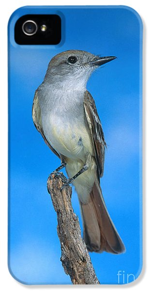 Ash-throated Flycatcher IPhone 5 Case
