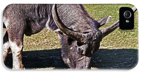 Asian Water Buffalo  IPhone 5 Case