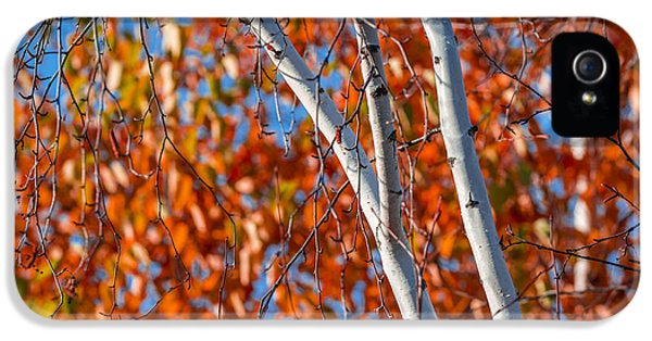 IPhone 5 Case featuring the photograph Aspen by Sebastian Musial