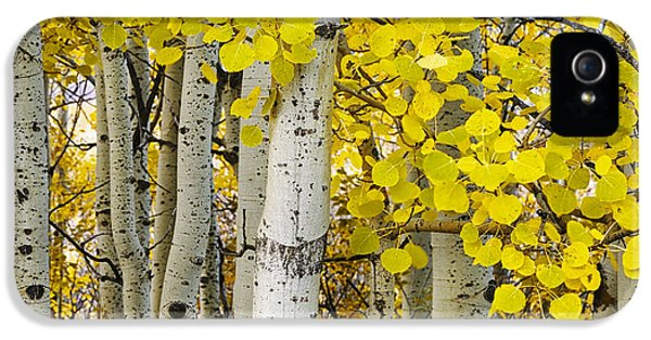 Aspens At Autumn IPhone 5 Case by Andrew Soundarajan