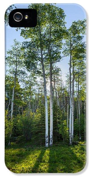 Aspens At Sunrise 1 - Santa Fe New Mexico IPhone 5 Case