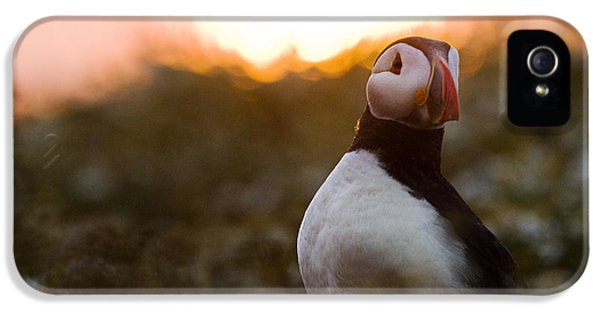 Atlantic Puffin At Sunrise Skomer IPhone 5 Case by Sebastian Kennerknecht