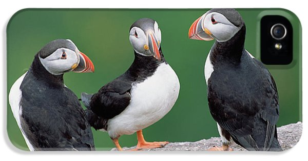 Atlantic Puffin Breeding Colony Canada IPhone 5 / 5s Case by