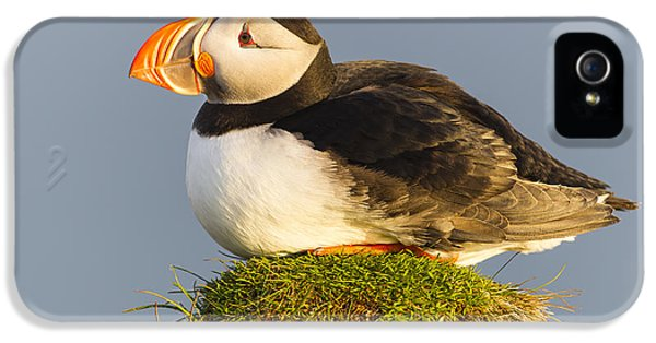 Puffin iPhone 5 Case - Atlantic Puffin Iceland by Peer von Wahl