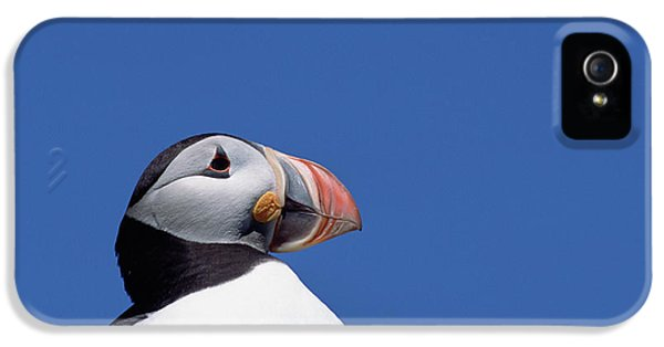 Atlantic Puffin In Breeding Colors IPhone 5 Case by Yva Momatiuk and John Eastcott