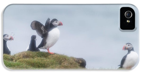 Atlantic Puffins Fratercula Arctica IPhone 5 Case by Panoramic Images