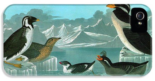 Auklets iPhone 5 Case - Audubon Auks by Granger