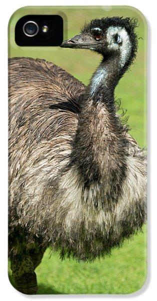 Emu iPhone 5 Case - Australia, South Australia, Adelaide by Cindy Miller Hopkins