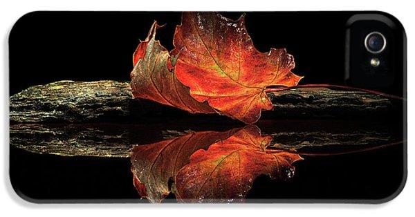 Autumn Colors IPhone 5 Case