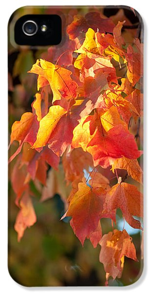 Autumn IPhone 5 / 5s Case by Sebastian Musial