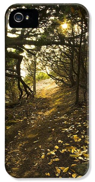 Autumn Trail In Woods IPhone 5 Case by Yulia Kazansky