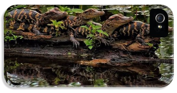 Baby Alligators Reflection IPhone 5 / 5s Case by Dan Sproul