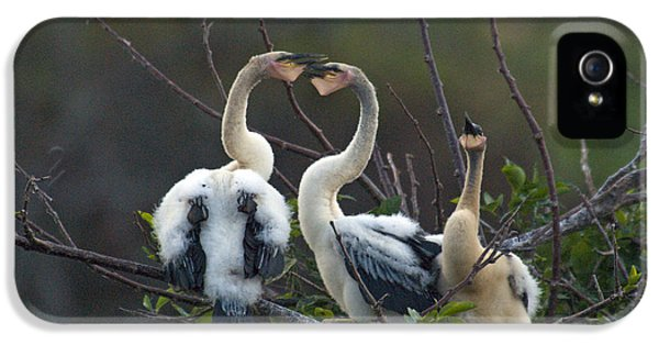 Baby Anhinga IPhone 5 Case by Mark Newman