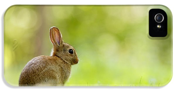 Baby Bunny In The Forest IPhone 5 Case