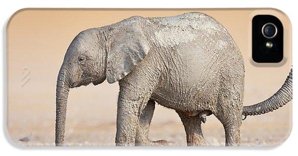 Baby Elephant  IPhone 5 Case by Johan Swanepoel
